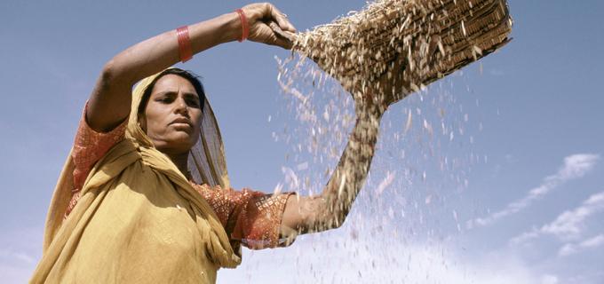 Sifting grain. India